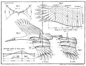 The White Stork as the Basis of the Art of Flying (Otto Lilienthal, 1889)